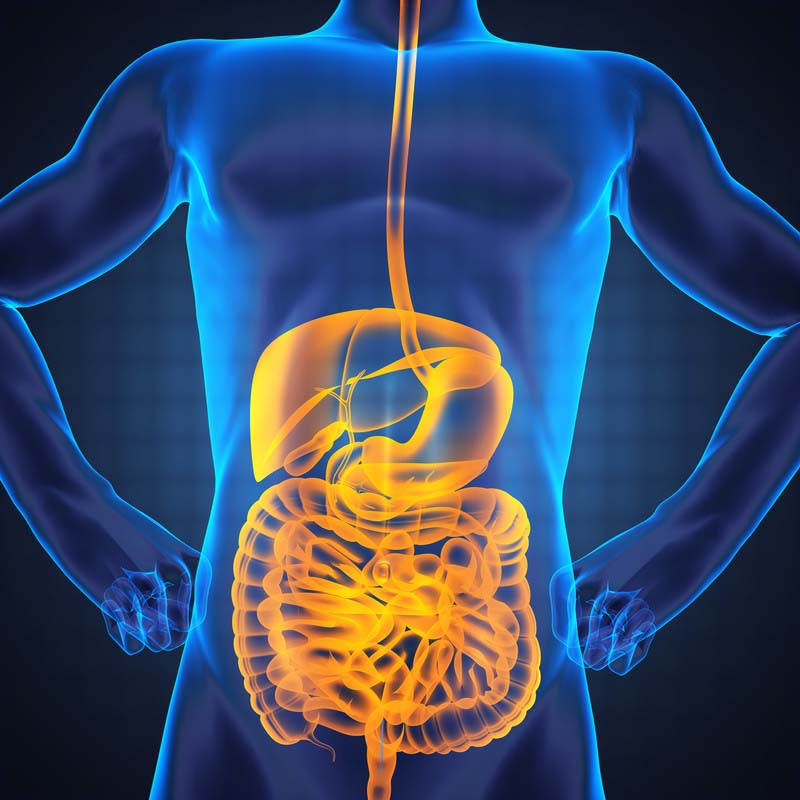The all powerful gut microbiome