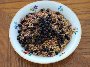 Wild blueberries over barley